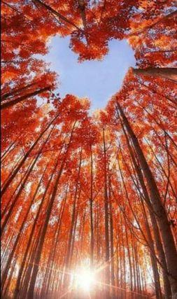 automne coeur